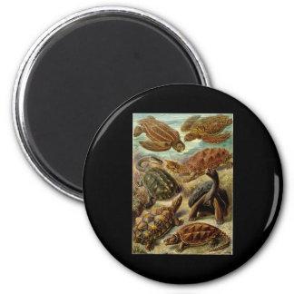 Chelonia de Ernst Haeckel Imán Redondo 5 Cm