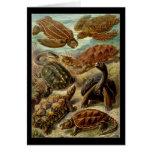 Chelonia de Ernst Haeckel Tarjetas