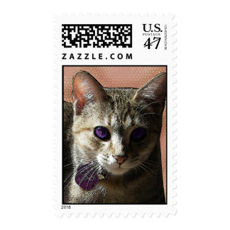 Chelya Kitty Cat with the Purple Eyes in Peach Postage