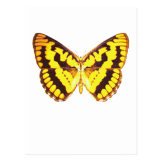 Chequered Skipper Butterfly Postcard