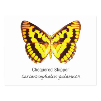 Chequered Skipper Butterfly with Name Postcard