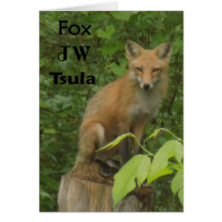Cherokee Fox Beautiful Photo Note Card