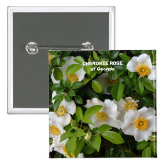 Cherokee Rose 2 Inch Square Button