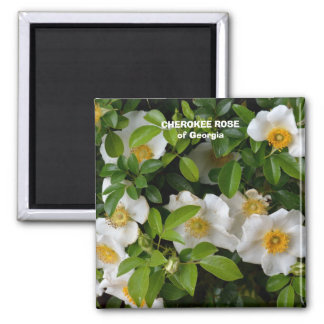 Cherokee Rose 2 Inch Square Magnet