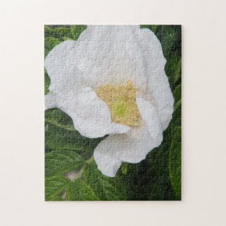 Cherokee Rose Puzzle