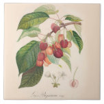 """Cherries 6 X 6 inch Ceramic Tile Kitchen Decor<br><div class=""""desc"""">Vintage image of cherries on a branch with French text,  perfect for the Farm House,  Country,  or French Country kitchen. Sturdy high gloss finish ceramic tile is 6 inches by 6 inches. Also available in smaller 4.25 by 4.25 inch square.</div>"""