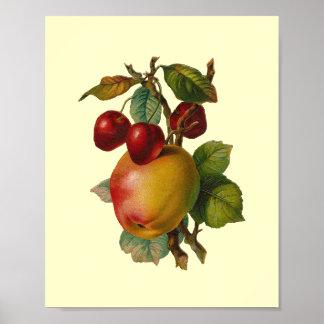 Cherries and Apples Vintage Print