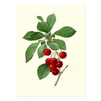 Cherries by Pierre-Joseph Redouté Post Card