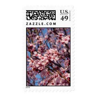 Cherries Jubilee (1) Postage Stamps