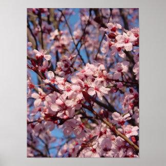 Cherries Jubilee (1) Poster