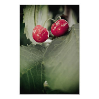 Cherries Photograph