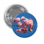 Cherry2 floreciente japonés pin