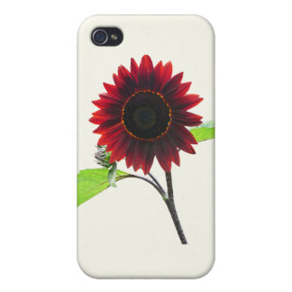 Cherry and Chocolate Sunflower Cover For iPhone 4