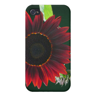 Cherry and Chocolate Sunflower iPhone 4 Cover