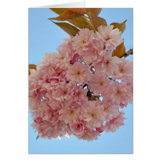 cherry blossom002 greeting card
