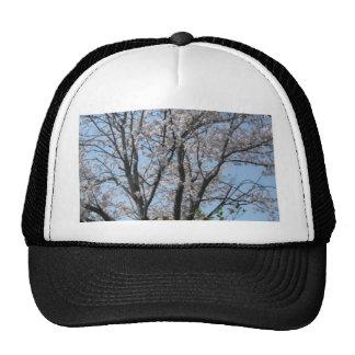 cherry blossom 1 mesh hats