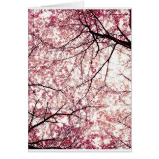 cherry blossom 2 card