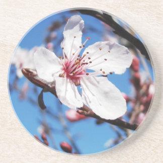 Cherry Blossom 2 Coaster
