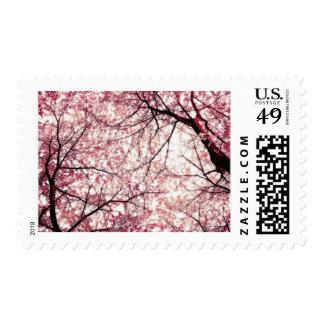 cherry blossom 2 postage