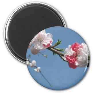 cherry blossom 3 magnet