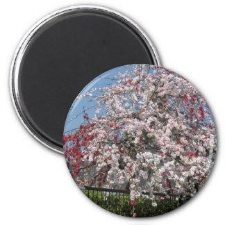 cherry blossom 4 refrigerator magnet