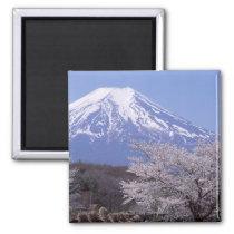 Cherry Blossom and Mt. Fuji Magnet