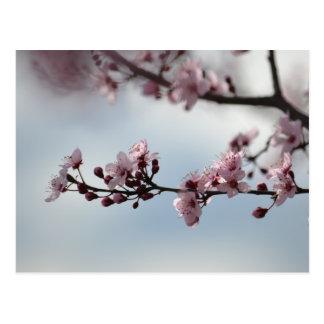 Cherry Blossom and Sky Postcard