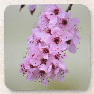 Cherry Blossom Beverage Coaster