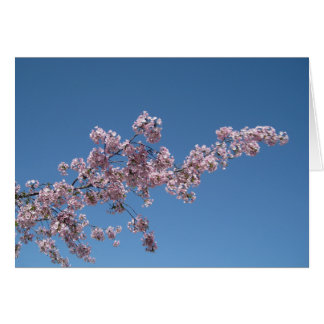 Cherry Blossom Blank Greeting Card