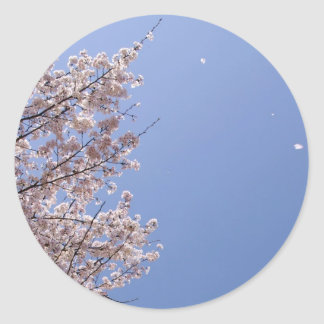 Cherry blossom blizzard (Hanafubuki) Classic Round Sticker