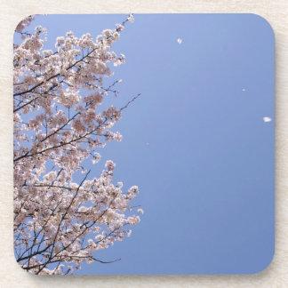 Cherry blossom blizzard (Hanafubuki) Coaster