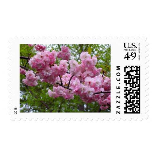 Cherry blossom branch stamps