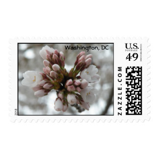 Cherry Blossom Buds Postage Stamp