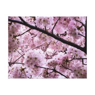 Cherry Blossom Canopy Canvas Print