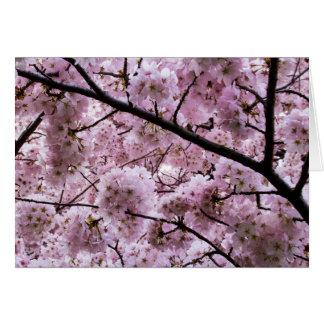 Cherry Blossom Canopy Card