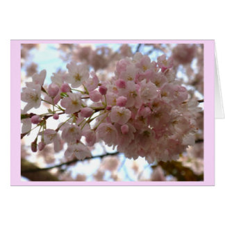 Cherry Blossom Card White Blossom Card Personalize