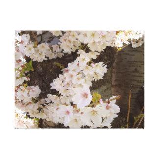 Cherry Blossom Cascade Canvas Print