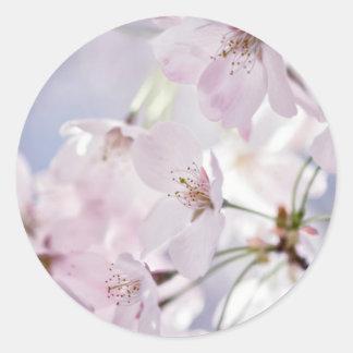 Cherry Blossom Classic Round Sticker
