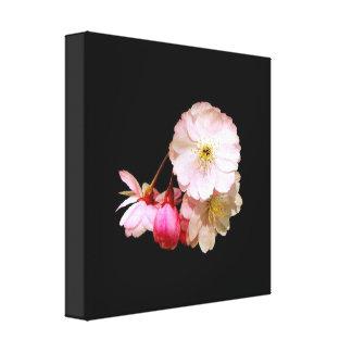 Cherry Blossom Close Up Canvas Print