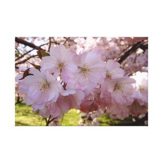 Cherry Blossom Cluster Canvas