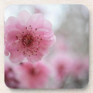 Cherry blossom drink coasters