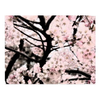 Cherry Blossom Edited Postcard