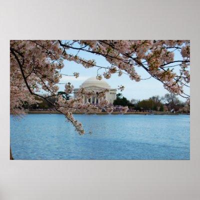 cherry tree blossom festival. Cherry Blossom Festival amp;amp;