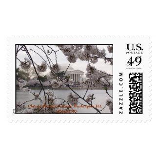 Cherry Blossom Festival, Washington DC Stamp