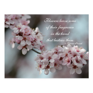 Cherry Blossom Floral Postcard