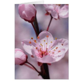Cherry Blossom Flowers Card
