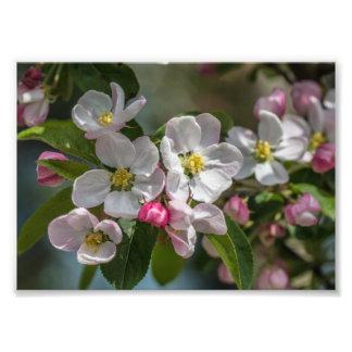 Cherry Blossom Flowers Photo Print