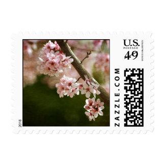 Cherry Blossom Flowers Postage