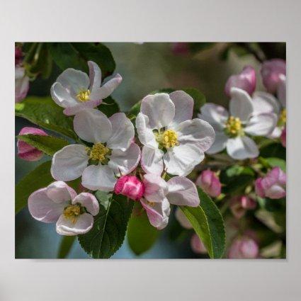 Cherry Blossom Flowers Print