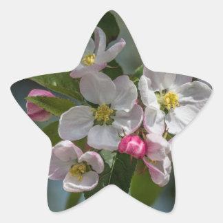 Cherry Blossom Flowers Star Sticker